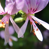 Flor01
